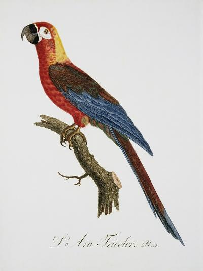 Tricolor Macaw-Jacques Barraband-Giclee Print
