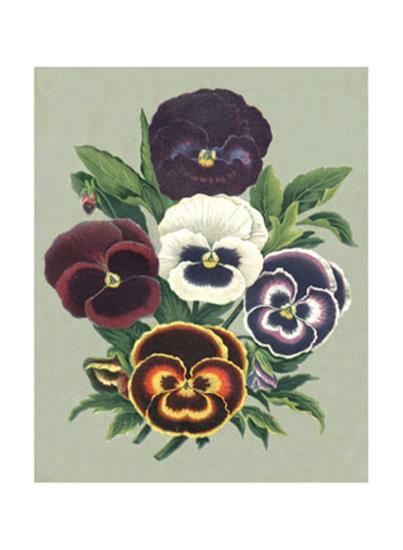 Tricolor Pansies I--Art Print