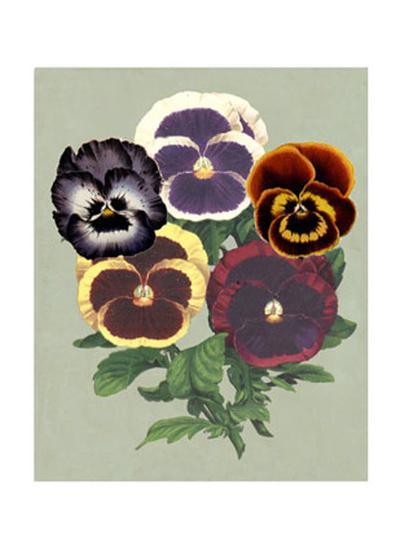 Tricolor Pansies II--Art Print