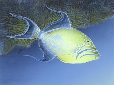 Trigger Fish-Durwood Coffey-Giclee Print