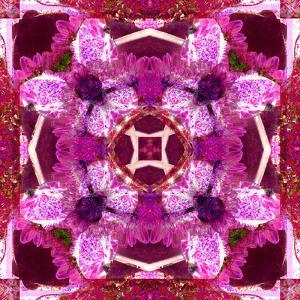 A Floral Mandala Montage by Trigger Image