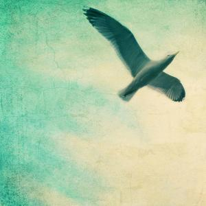 Close-Up of a Gull Flying in a Texturized Sky by Trigger Image