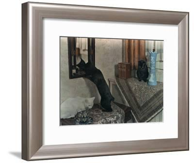 Trio of Tailless Manx Cats Play on House Furniture-Willard Culver-Framed Photographic Print