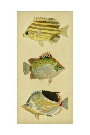 https://imgc.artprintimages.com/img/print/trio-of-tropical-fish-i_u-l-q1boxjo0.jpg?p=0