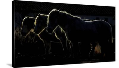 Triplets-Michel Romaggi-Stretched Canvas Print