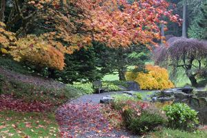 Bloedel Reserve. Pathway Through Japanese Gardens in Fall Color by Trish Drury