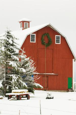 North America, USA, WA, Whidbey Island. Festive red barn in fresh snow