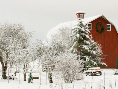 Red Barn in Fresh Snow, Whidbey Island, Washington, USA by Trish Drury