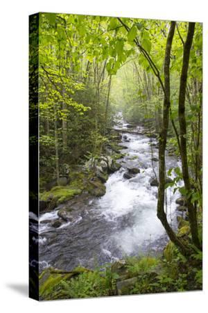 USA, Tennessee, Smoky Mountain NP. Middle Prong trail of Little River.