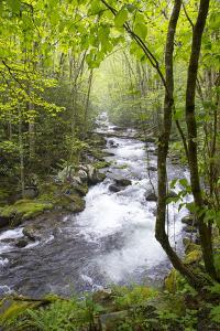 USA, Tennessee, Smoky Mountain NP. Middle Prong trail of Little River. by Trish Drury