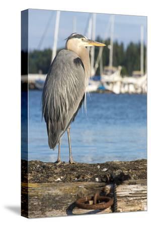 USA, Washington State, Poulsbo Great Blue Heron on marine floatation.