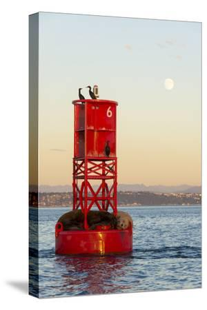 Washington, California Sea Lions and Cormorants. Full Moon