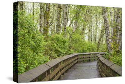 Washington State, Sandpiper Trail Boardwalk in Alder Tree Grove
