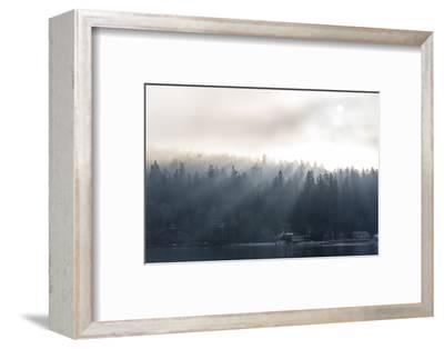 Washington State, Shafts of Morning Light Piercing Fog Make God Rays Through Trees