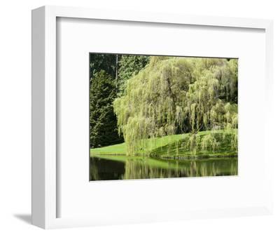 Weeping Willow, Japanese Gardens, Bloedel Reserve, Bainbridge Island, Washington, USA