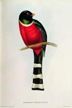 https://imgc.artprintimages.com/img/print/trogon-mexicanus_u-l-puoyl50.jpg?p=0