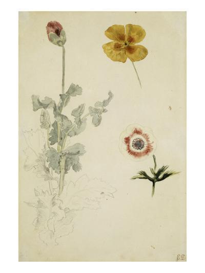 Trois études de fleurs: anémone, pensée, ?; vers 1845-1850-Eugene Delacroix-Giclee Print