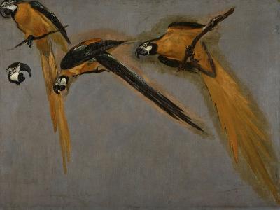 Trois perroquets aras et une tête-Pieter Boel-Giclee Print