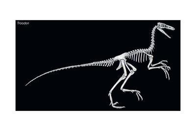 https://imgc.artprintimages.com/img/print/troodon-skeleton-dinosaurs_u-l-q135kk90.jpg?p=0