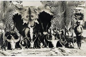 Trophies, c.1910