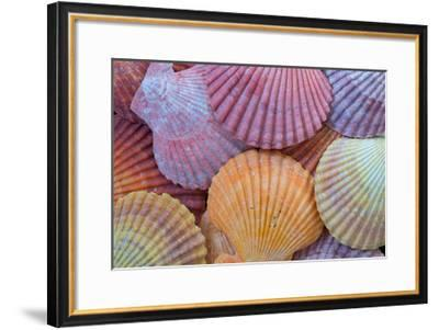 Tropic Shells III-William Neill-Framed Giclee Print