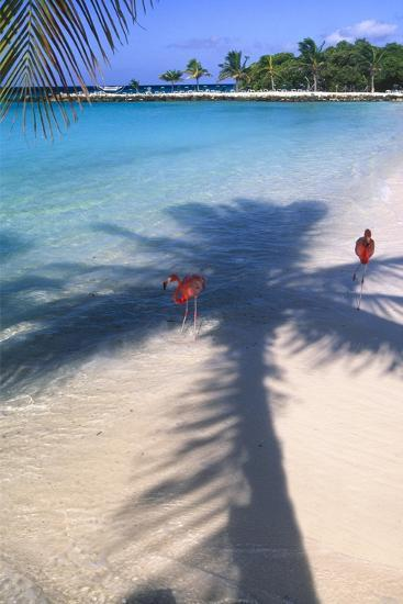 Tropical Beach with Pink Flamencos Aruba-George Oze-Photographic Print