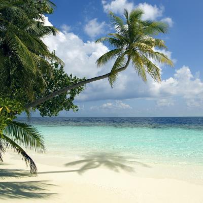 Tropical Beach-Peter Scoones-Photographic Print