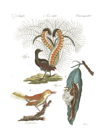 Tropical Bird and Peacock Illustrations--Art Print