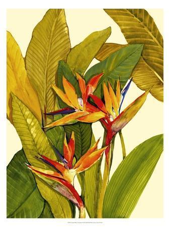 https://imgc.artprintimages.com/img/print/tropical-bird-of-paradise_u-l-ph6e060.jpg?p=0