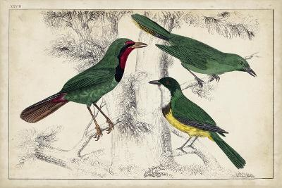 Tropical Bird Trio I--Art Print