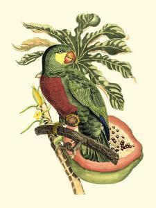 Tropical Birds and Botanicals II