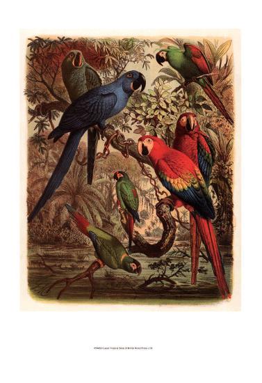 Tropical Birds III-Cassel-Art Print