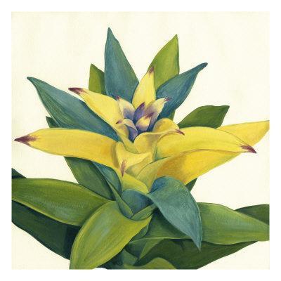 https://imgc.artprintimages.com/img/print/tropical-bloom-ii_u-l-pxn0mm0.jpg?p=0
