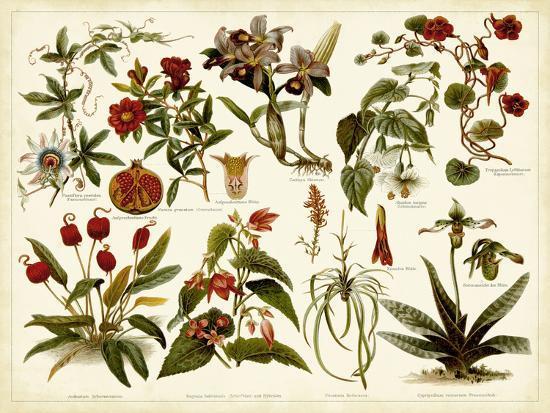 Tropical Botany Chart II-Meyers-Art Print