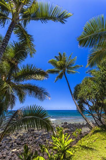 Tropical Coastline of Princeville, Hi-Andrew Shoemaker-Photographic Print