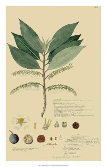 Tropical Descubes III-A^ Descubes-Giclee Print