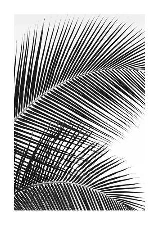 https://imgc.artprintimages.com/img/print/tropical-fan_u-l-f990e70.jpg?p=0