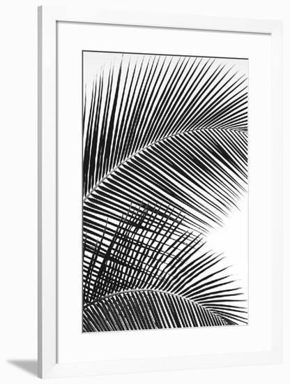 Tropical Fan-Dennis Frates-Framed Art Print