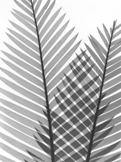 Tropical Fern 1-Albert Koetsier-Art Print