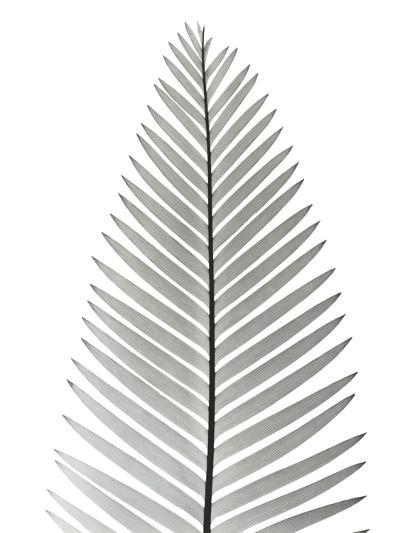 Tropical Fern 2-Albert Koetsier-Art Print