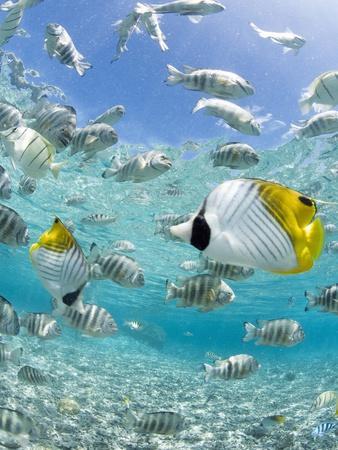 https://imgc.artprintimages.com/img/print/tropical-fish-in-bora-bora-lagoon_u-l-pzl8ub0.jpg?p=0