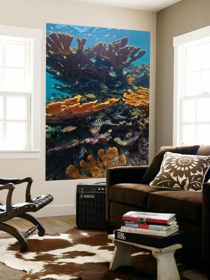 Tropical Fish Take Refuge Amongst Elkhorn Coral-Stocktrek Images-Giant Art Print