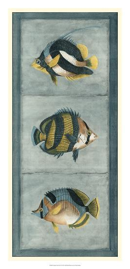 Tropical Fish Trio II--Giclee Print