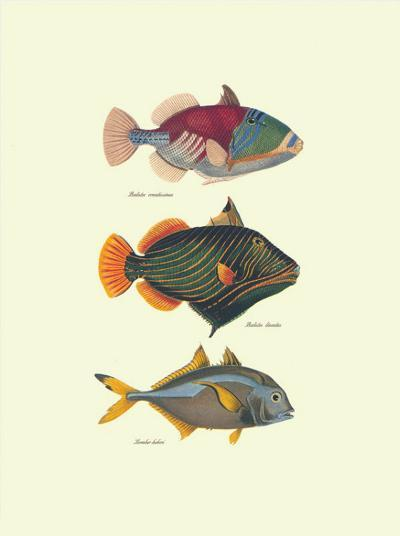 Tropical Fish-Georges Cuvier-Art Print