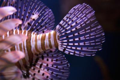 Tropical Fish-Karyn Millet-Photographic Print