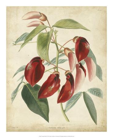 https://imgc.artprintimages.com/img/print/tropical-floral-i_u-l-f5bww60.jpg?p=0