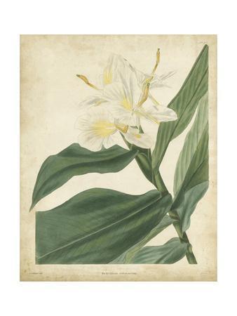 https://imgc.artprintimages.com/img/print/tropical-floral-iv_u-l-pnbmt30.jpg?p=0