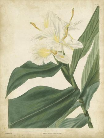 https://imgc.artprintimages.com/img/print/tropical-floral-iv_u-l-pnbmt40.jpg?p=0