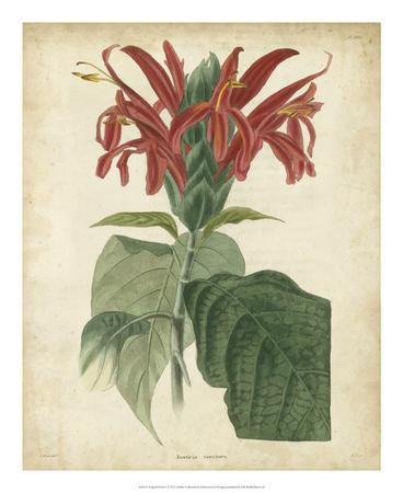 https://imgc.artprintimages.com/img/print/tropical-floral-v_u-l-f5bwwa0.jpg?p=0