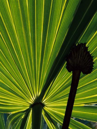 Tropical Foliage of Everglades National Park, Florida, USA-Jerry Ginsberg-Photographic Print
